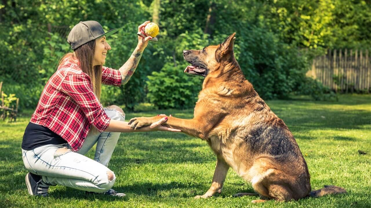 PetShow - Serviço Creche para Pet