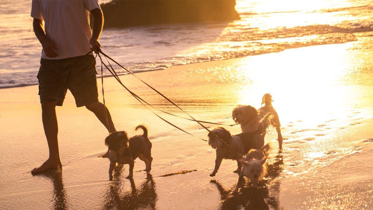 PetShow - Serviço Passeio com cão